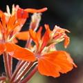 照片: 橙色の花