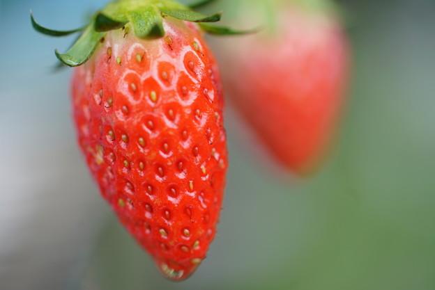 写真: イチゴ