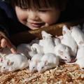 写真: 動物愛