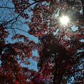 写真: 天晴的秋