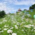 写真: 1503491477_52