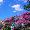 Photos: 1503606069_88