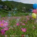 Photos: 1504039332_83