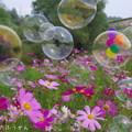 Photos: 1505318775_68