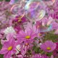 Photos: 1506611744_38