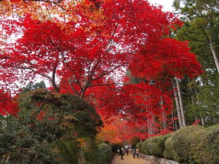 金剛峰寺の紅葉