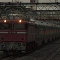 写真: EF81カシオペア回送 東北本線西川口駅01