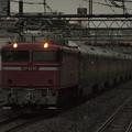 写真: EF81カシオペア回送 東北本線西川口駅02