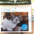 Photos: 岩合光昭さん週めくりも届いたにゃあ!~ねこカレンダー~毎週悶絶身体がもたない生きる支え(=^ェ^=)
