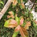 写真: 緑→赤→紅葉へ彩り~枯れゆく~autumn in iPhone7Plus キレイだしボケるし♪