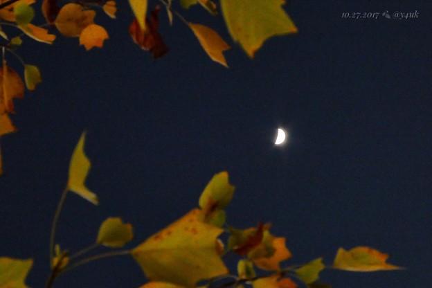 Photos: 紅葉+三日月=最高~autumn in leaves moon nights mix