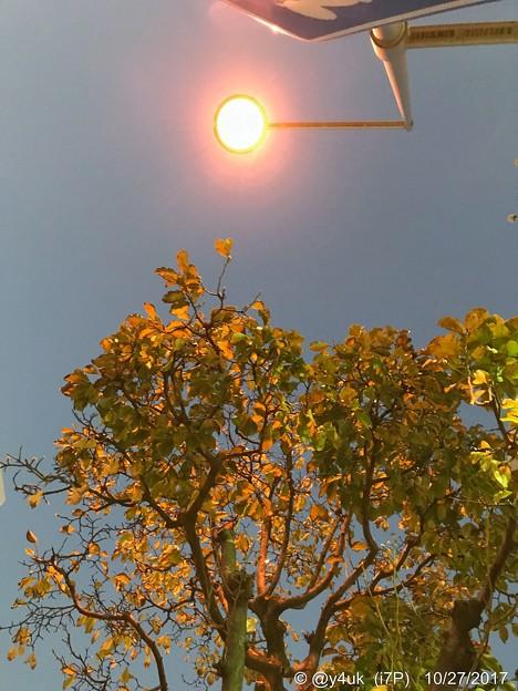 街灯で自然にライトアップ街路樹の紅葉~lightup leaves street