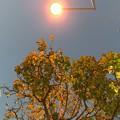 写真: 街灯で自然にライトアップ街路樹の紅葉~lightup leaves street