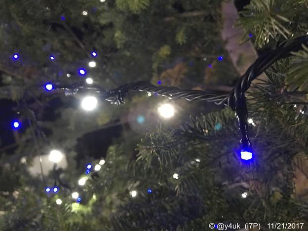 Night Xmas Tree ~夜に輝く青と白~iPhoneでボケ~
