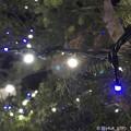 写真: Night Xmas Tree ~夜に輝く青と白~iPhoneでボケ~