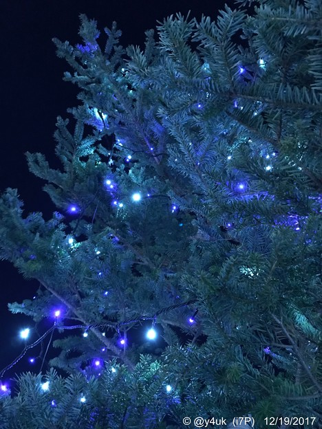 Photos: Blue & White Lights Nights Xmas Tree [WB cold edit]