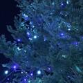 Photos: Blue & White Lights Nights Xmas Tree [WB cold edit]