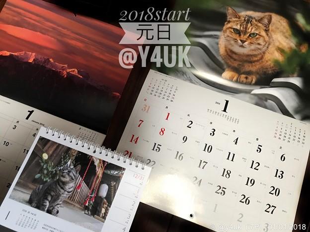 写真: 2018Start元日 ~岩合光昭にゃんこ、信州長野~本年もどうぞよろしくにゃ!