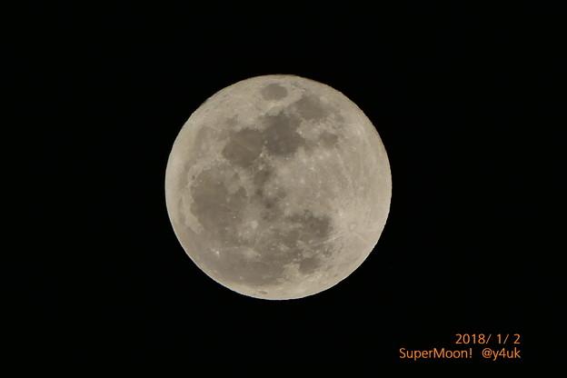 写真: 2日お正月いきなりスーパームーン~月に吠えろ!今年こそ飛べ!~2018年最大の満月