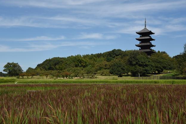 備中国分寺と赤米田