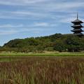 写真: 備中国分寺と赤米田