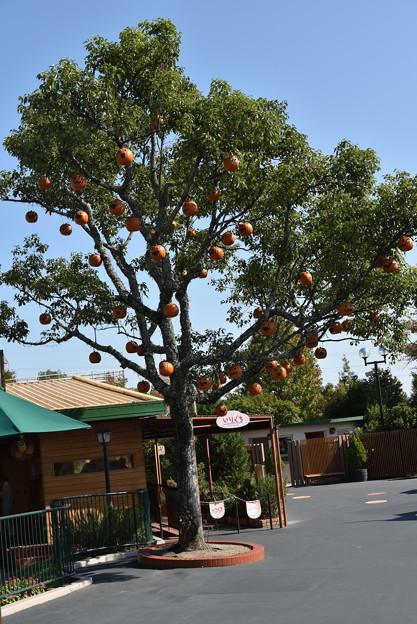 ハロウィンの樹