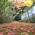 写真: もみじの道