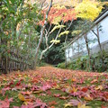 Photos: もみじの道