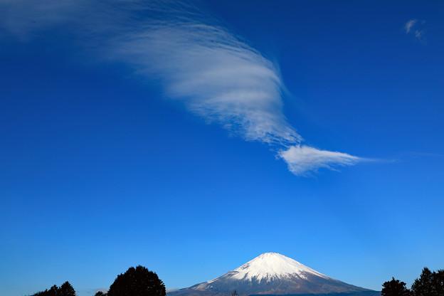 写真: 冬空を眺めて