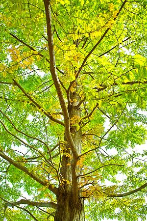 姨捨の木(SDIM0214c)