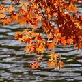 紅葉 晩秋の水面と