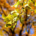 Photos: 秋色です