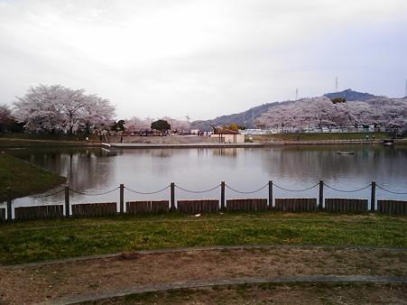 徳島 石井の前山公園