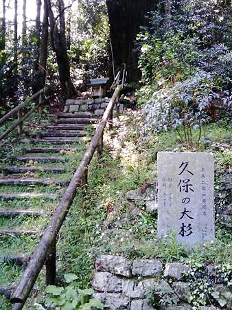 徳島 上勝 久保の大杉