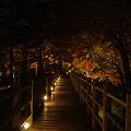 Photos: 魅惑の橋