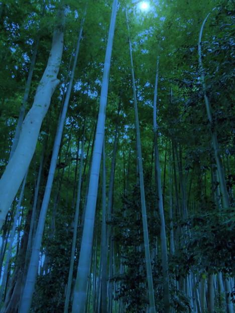 写真: 妙壽寺-09b竹林(1-2)
