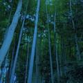Photos: 妙壽寺-09b竹林(1-2)