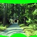 写真: 森の教会-01b