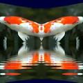 Photos: ピエロの鯉-01c