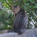 写真: _171026 484 トラ猫