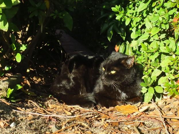 _171225 663 胸に白ポッチのある黒猫
