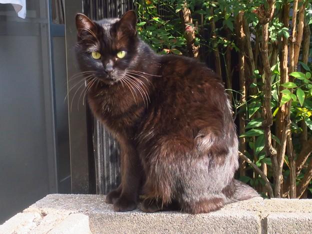 _180116 073 日向ぼっこする黒猫