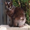 写真: _180116 073 日向ぼっこする黒猫