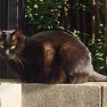 写真: _180116 035 日向ぼっこする黒猫