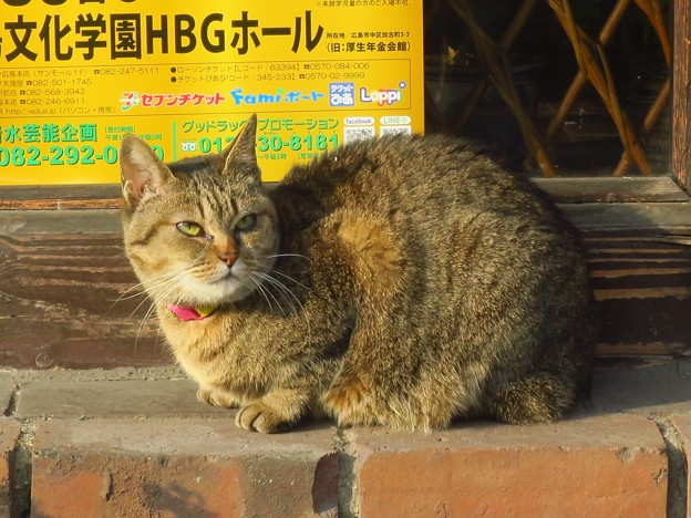 _180123 010 朝のトラ猫
