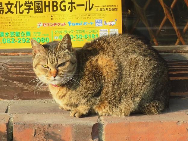 _180123 007 朝のトラ猫