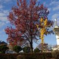 花博通りの紅葉