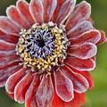 初冬の花2