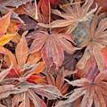 落ち葉も凍る