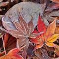 落ち葉も凍る2